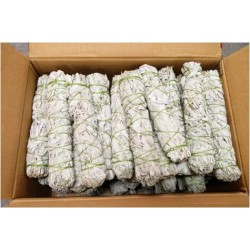 "Case of 9"" California White Sage(100pcs)"