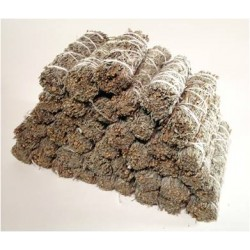 "4"" California Blue Sage(40 pk)"