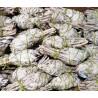 "4"" White Sage Torch(40 pk)"