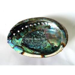 "Mexico Green Abalone Shell - 5"""
