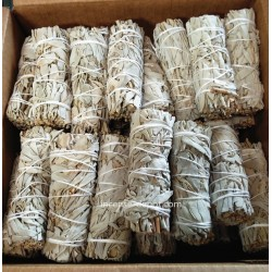 "4"" California White Sage(100 pk)"