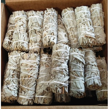 "4"" California White Sage(40 pk)"