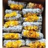 """White sage/Strawflower 4"""" (40 pk)"""